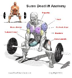 Good article on the differences and proper form for regular, stiff, sumo and romanian deads
