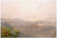 cor de fogo ... resistir! //   Autor(a) Victor Sagim //   Upload 2010-08-21 02:53 //   cor de fogo ... resistir! // fogo na serra de sintra. agosto 2010