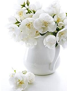 51 best flowers in white vase images on pinterest beautiful white flowers in a white jug perfect mightylinksfo