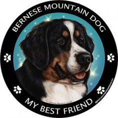 """Bernese Mountain Dog - My Best Friend Magnet, from Dogstuff.com. Printed with weather-resistant UV ink, this round magnet is easy to apply to your car, truck or boat and will keep you smiling for years. Magnet is full color with black and white border. Message reads: """"Bernese Mountain Dog - My Best Friend"""" Best Friend magnet, approximately measures 5..."""