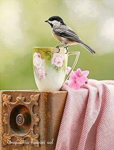 Quero viver intensamente todas as boas surpresas que a vida  me trouxer, e se por ventura, alguma não for tão boa assim, eu a transformo em benção, e vivo ela também.  Rosi Coelho
