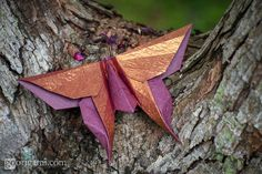 Kawasaki Swallowtail Butterfly by Maria Sinayskaya