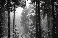 Wintry Grey by *alexandre-deschaumes on deviantART Forest Wallpaper, Winter Wallpaper, Photo Wallpaper, Snow Forest, Night Forest, Alexandre Deschaumes, Full Hd Wallpaper Download, Current Picture, Forest Background