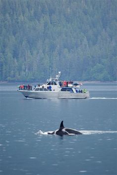 Vancouver Island, B. need to see a whale this time! Vancouver Bc Canada, Ends Of The Earth, Orcas, Gandalf, Most Beautiful Cities, Travel And Tourism, Canada Travel, Whales, Oh The Places You'll Go