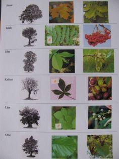 Místo pro život - didaktický portál | Podzimní cesta k přehradě Plant Leaves, Plants, Plant, Planets