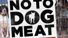 Petition · World Governments: Enforce legislation to end the Illegal Dog and Cat Meat Trade in South East Asia · Change.org