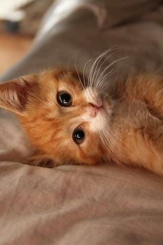 I'm not partial to ginger cats but this little guy is hard to resist.