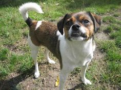 ROCCO is a very happy boy. He loves to spend time with people and enjoys his walks.