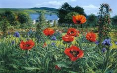 Poppies and Iris