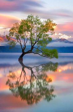 Lake Wanaka, New Zealand - Karen Plimmer Mother Nature finds A Way! Beautiful World, Beautiful Images, Landscape Photography, Nature Photography, Lake Wanaka, Jolie Photo, Amazing Nature, Nature Photos, Pretty Pictures