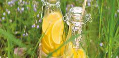 Z citronů vymačkejte šťávu a přes jemný cedníček ji nalijte do velkého džbánu, přidejte cukr a míchejte, dokud se nerozpustí. Vmíchejte zázvor,... Voss Bottle, Water Bottle, Glass Vase, Table Decorations, Drinks, Lemon, Syrup, Drinking, Beverages