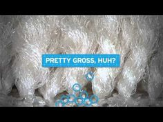 The Dirty Truth About Fleas. An engaging video about fleas. Mobile Vet, Veterinary Services, Flea And Tick, Cool Pets, Ticks, Fleas, Vet Office, Dream Career, Pet Stuff