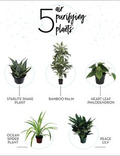 11 Easy To Grow Houseplants Houseplants Easy and Plants