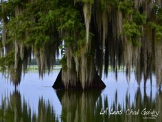 Just one of the beautiful photographs by Louisiana Through My Lens...
