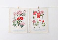 Vintage Flower Illustrations  floral prints in by peonyandthistle