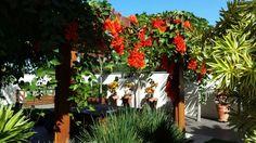 jade vermelha, #viaverdepaisagismo