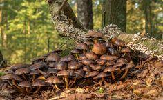 Autumn mushrooms at Kaapse bossen Doorn, the Netherlands