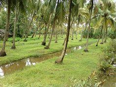 Kerala village beauty.... by vikas photography, via Flickr