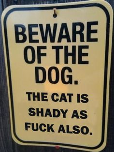Please, the cat is way shadier than the dog.