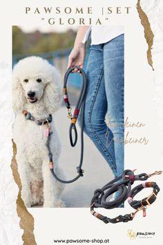 Für anspruchsvolle Stadtwölfe, aber auch stilbewusste Waldpfoten bestens geeignet: Unser mit viel Liebe und Sorgfalt handgefertigtes Set GLORIA, bestehend aus Halsband und Leine. Bewusst Ton in Ton gehalten und mit farbigen Highlights aufgepeppt, wird das Set zu einem vielseitigen Begleiter für eure gemeinsamen Abenteuer!#pawsomeshop#tauleine#hundezubehör Dog Grooming, Tricks, Rat, Female, Dogs, Shopping, Dog Things, Dog Owners, Dog Accessories