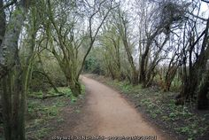 :: Brent River Park Path, near to Southall, Ealing, Great Britain by N Chadwick River Park, Beautiful Park, Great Britain, Paths, Ireland, Country Roads, Green, Image, Irish