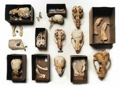 (via Forbidden Alleys - Curiosity CLXXV - A Paper Cabinet Published by. Matchbox Art, Cabinet Of Curiosities, Animal Bones, Danse Macabre, Assemblage, Skull And Bones, Memento Mori, Natural History, Altered Art