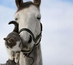 Cat and her Horse