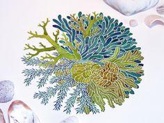 Watercolor Sea Plant Illustrations by Sasha Prood, via Behance