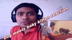 #Dog meets baby kitten|| React Video|| By My React Video World