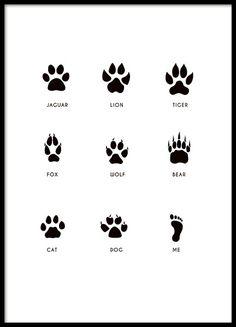 Schwarz-weißes Kinderposter mit den Abdrücken verschiedener Tierpfoten und dem Fußabdruck eines Menschen. Total niedliches Poster, das perfekt zu einem neugierigen Kleinkind passt. www.desenio.de