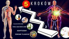 10 sposobów na naturalne zrównoważenie poziomu hormonów – Motywator Dietetyczny Pcos, Movie Posters, Film Poster, Polycystic Ovary Syndrome, Film Posters