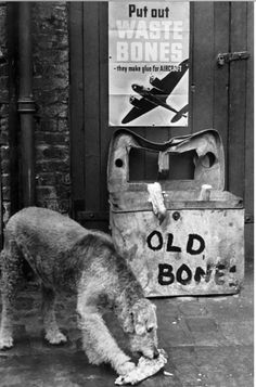 Waste Bones Campaign, This Airedale, donates his bone to make glue for War aircraft.