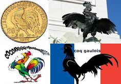 Cocoşul galic, simbol al Franţei Rooster, Animals, Astrology, Animales, Animaux, Animal, Animais, Chicken