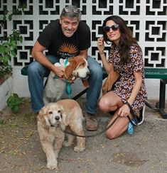 Familia Basset Hound: George Clooney e esposa adotaram Basset Hound de a...