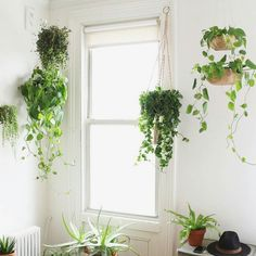 Loving this indoor greenery!    @alanajonesmann Re-post by Hold With Hope
