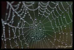 Morning dew drops on a web