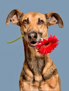 Greetings from Noodles, the flower girl - All my pictures here can be licensed or bought as prints. Just send me a message via info@elkevogelsang.com