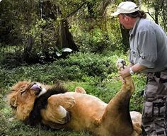 足つぼマッサージをしてもらうライオン