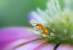 Photograph Oasis by Miki Asai on 500px
