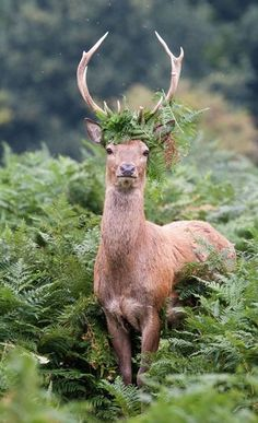 Wild ferns. He knows he's a prince.