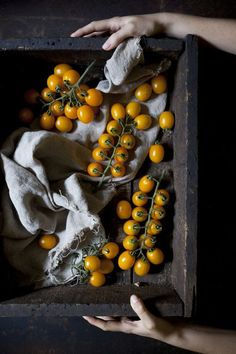 Lovely rich gold tomatoes against dark and moody background.