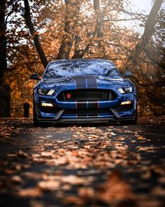 Cars Discover People are angry with Ford because of its scrappage scheme Mustang Ford Mustang Shelby Ford Shelby Mustang Cars Luxury Sports Cars Best Luxury Cars Sport Cars Ford Mustang Wallpaper Shelby Mustang Gt500, Ford Mustang Shelby Gt500, Luxury Sports Cars, Best Luxury Cars, Sport Cars, Shelby Gt350r, Ford Mustang Wallpaper, Automobile, Street Racing Cars