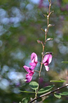 tiny flower friends
