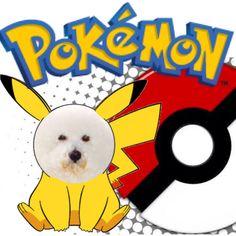 Spike Pikachu  #spikebichon