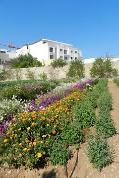Malta: The President's Kitchen Garden