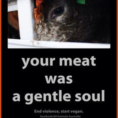 Stop eating meat and