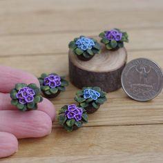 Miniature plants ♡ ♡ By Irinka