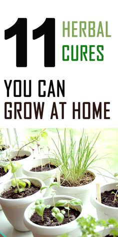 11 Herbal Cures to Grow at Home