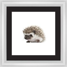 Baby Hedgehog Framed Print, White, Classic, Black, Black, Single piece, 16 x 16 inches