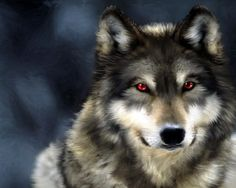 The danger of the wolf